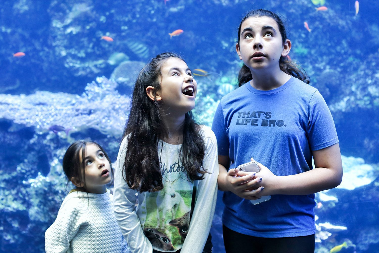 georgia aquarium, atlanta attractions, things to do in atlanta, top attractions atlanta, things to do with kids in atlanta, georgia tourist attraction, things to do in georgia, aquarium, atlanta georgia, downtown atlanta, things to do in downtown Atlanta