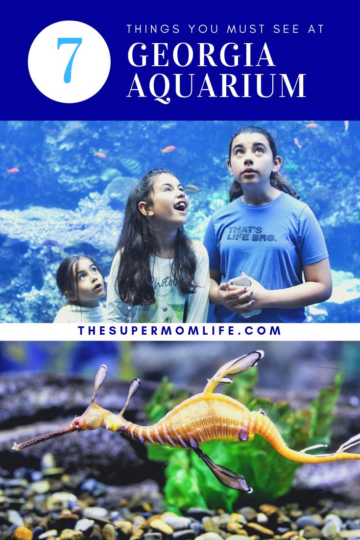 Here are the things you must see at Georgia Aquarium in Atlanta, GA