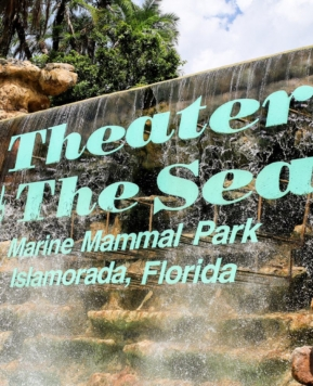 Things to do in Florida {Series} – Theater of the Sea