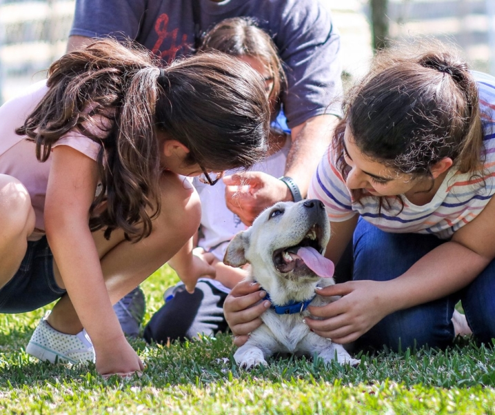 Do Dogs Help People With Anxiety?