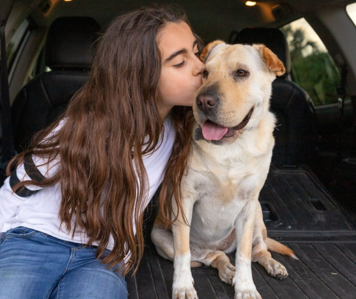 Everything You Need for Dog Travel